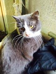 Котик Стёпа — обладатель шикарных усов в дар!
