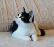 котенок девочка в поисках дома