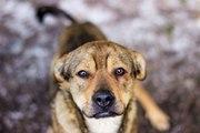 Удивительный пёс Бобби ищет дом
