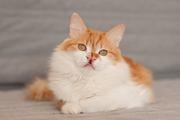 Эльф - чудо-котик в дар ответственным людям.