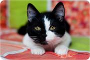 Кирби - котенок день и ночь