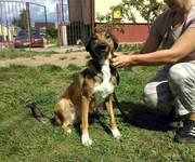 В ДАР! ЛИЗА --молодая собачка в добрые руки