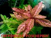 Гигрофила розенервиг. НАБОРЫ растений для ЗАПУСКА и ПЕРЕЗАПУСКА аквас=